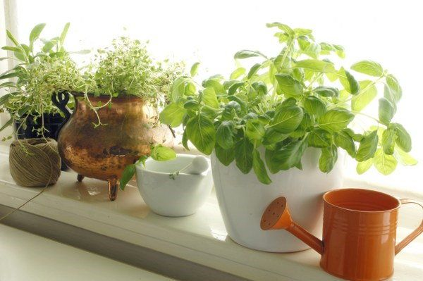 indoor gardening gifts