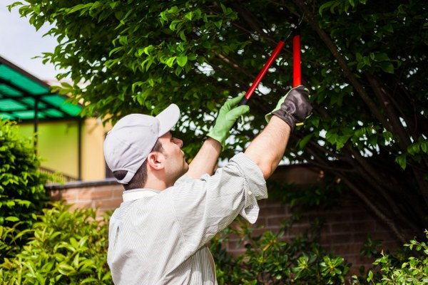 summer tree pruning