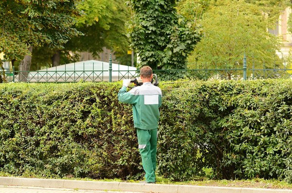 autumn hedge cutting