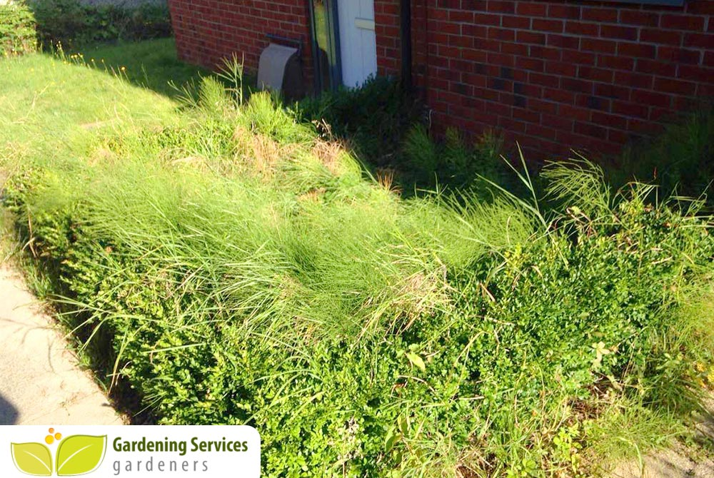Stockwell landscaping company SW9