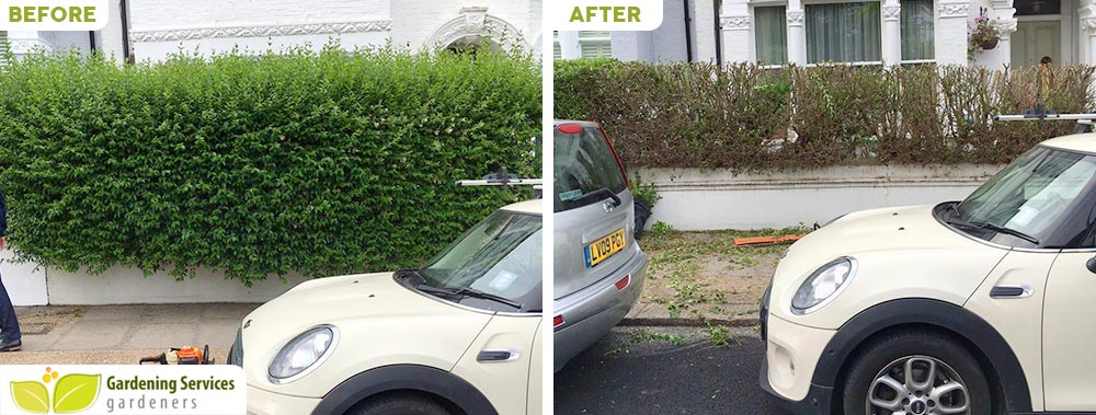 low maintenance landscaping SW19