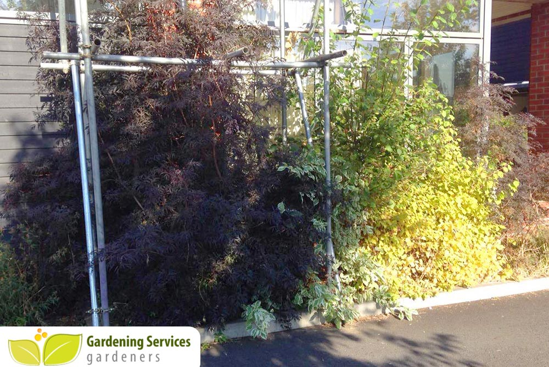 Marylebone Soho gardening uk