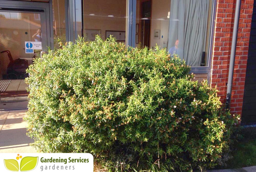 Tooting gardening uk