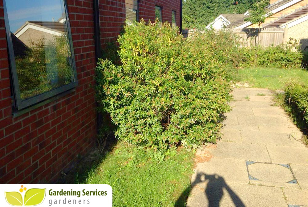 low maintenance landscaping TW12