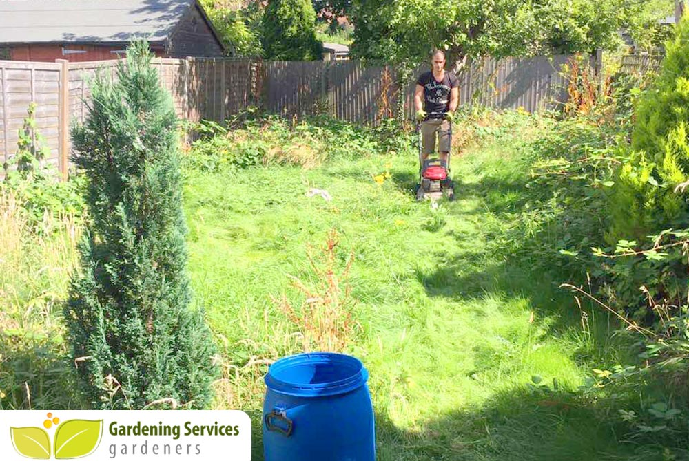 low maintenance landscaping N17